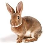 albuquerque rabbit vet