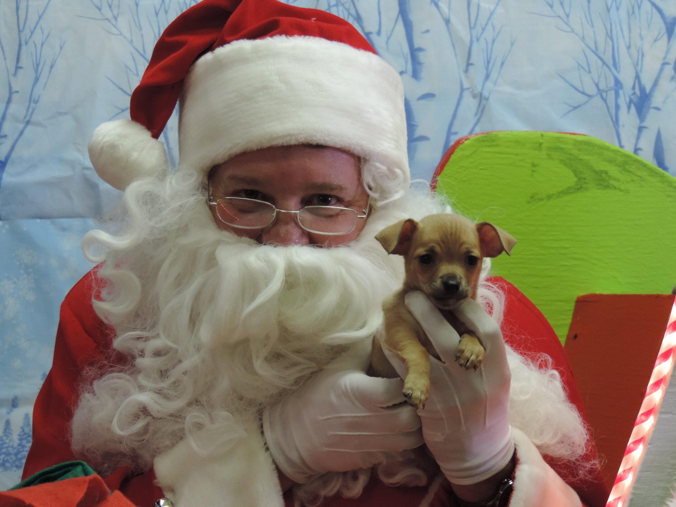 Pet Photos with Santa Albuqerque