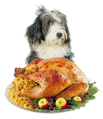 Albuquerque Pet Thanksgiving