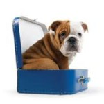 Travel with your dog vetco