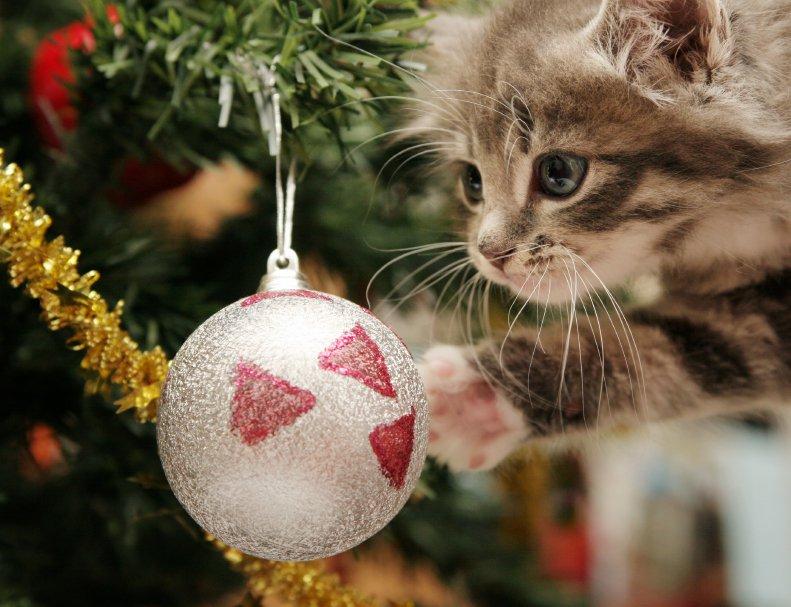 Cat Christmas Tree Albuquerque