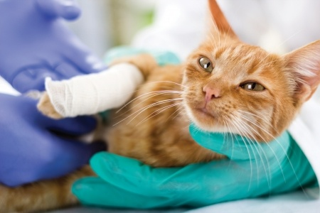 albuquerque low cost pet surgery