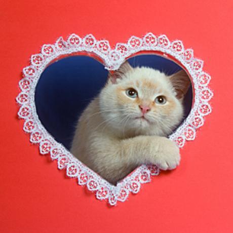 Vetco Valentines Day