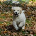 Fall Prep and Pet Safety