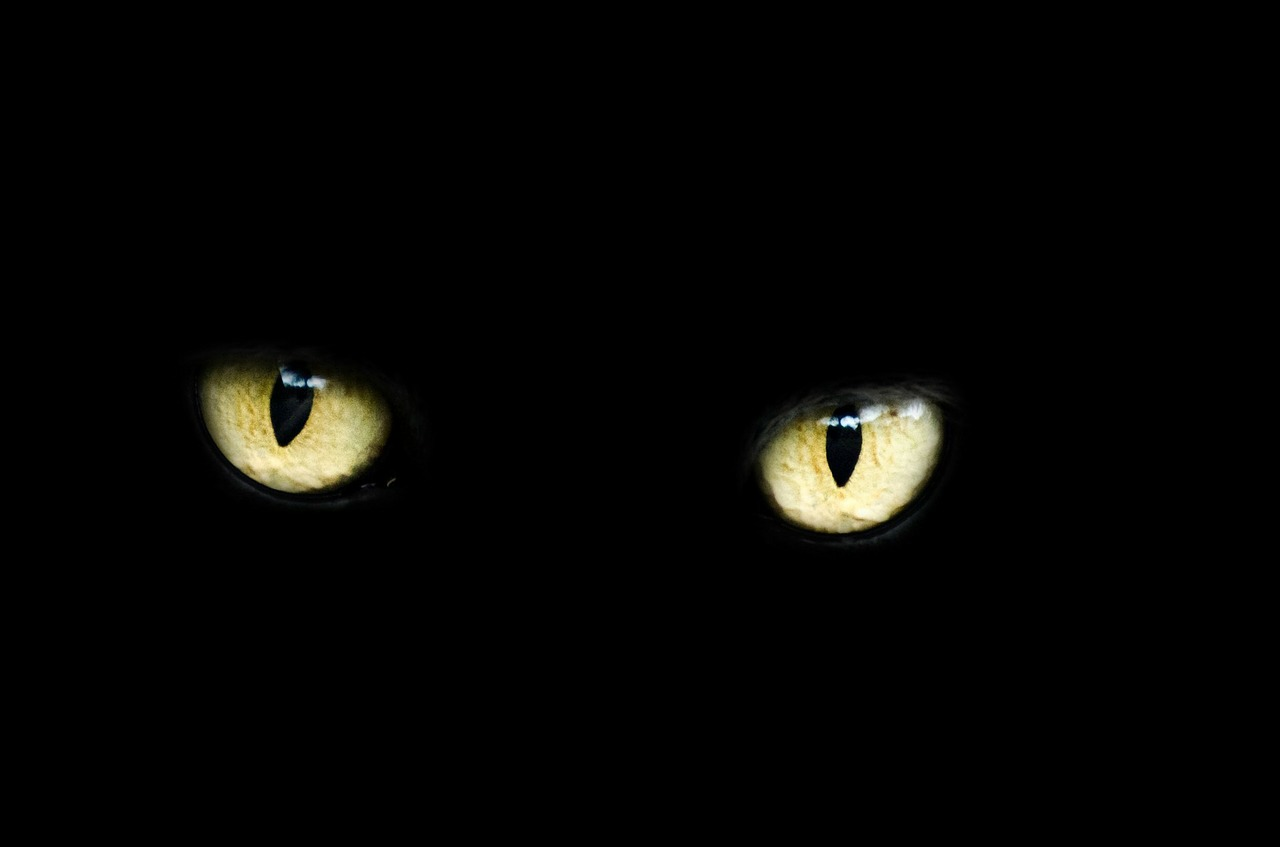 black cat halloween myth and safety