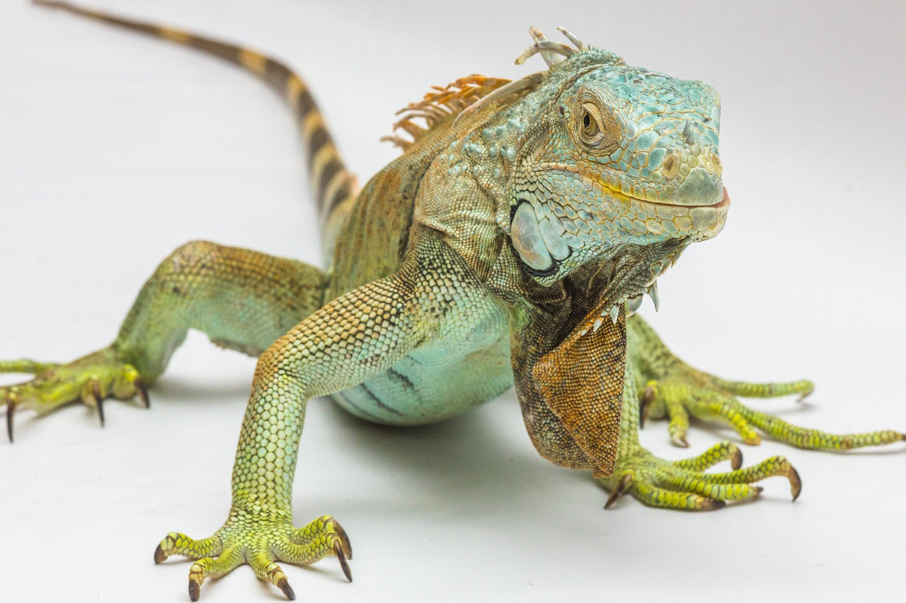 national reptile day