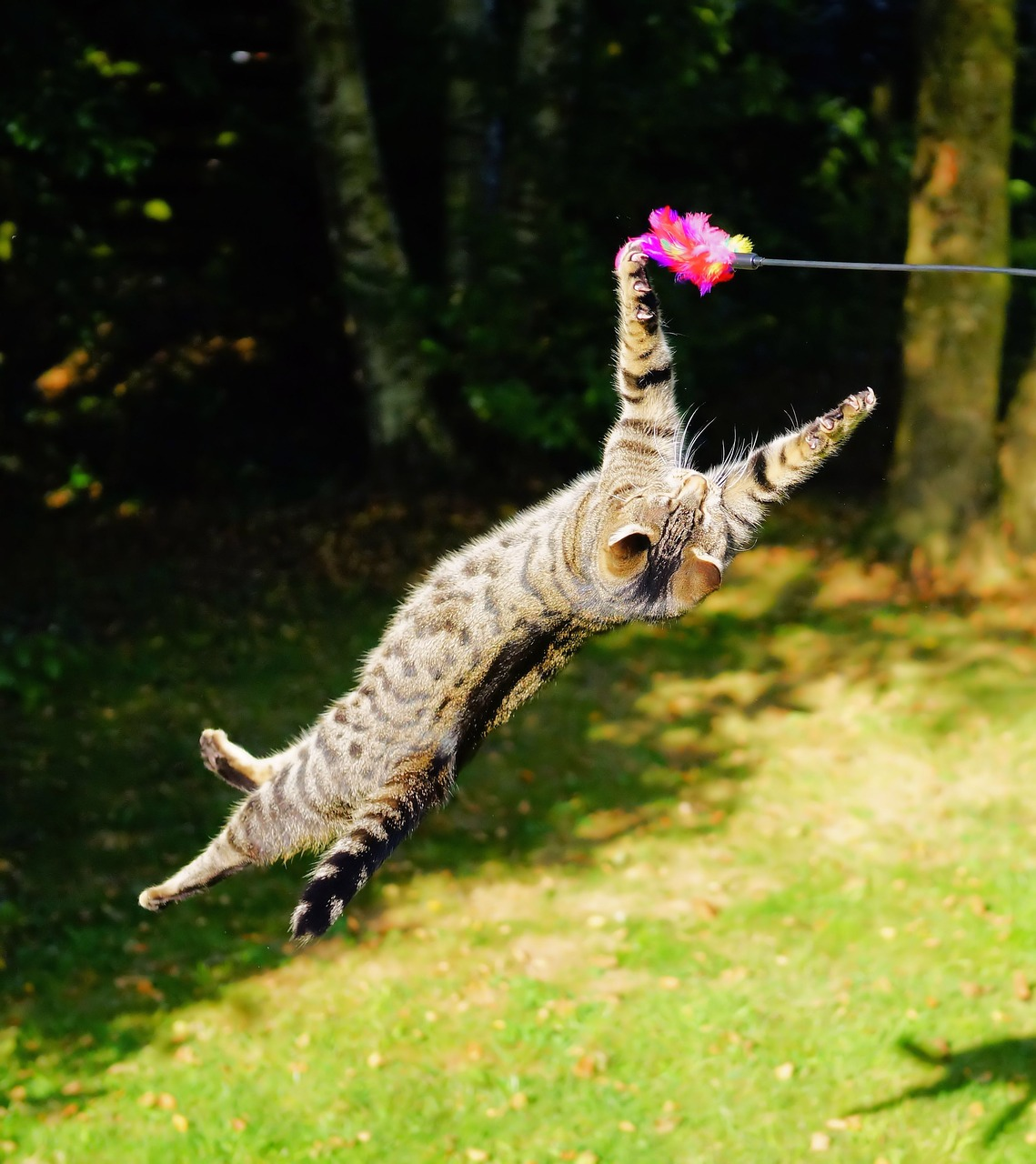 albuquerque cat holiday gift guide