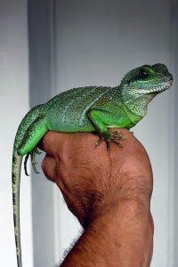 exotic pets albuquerque