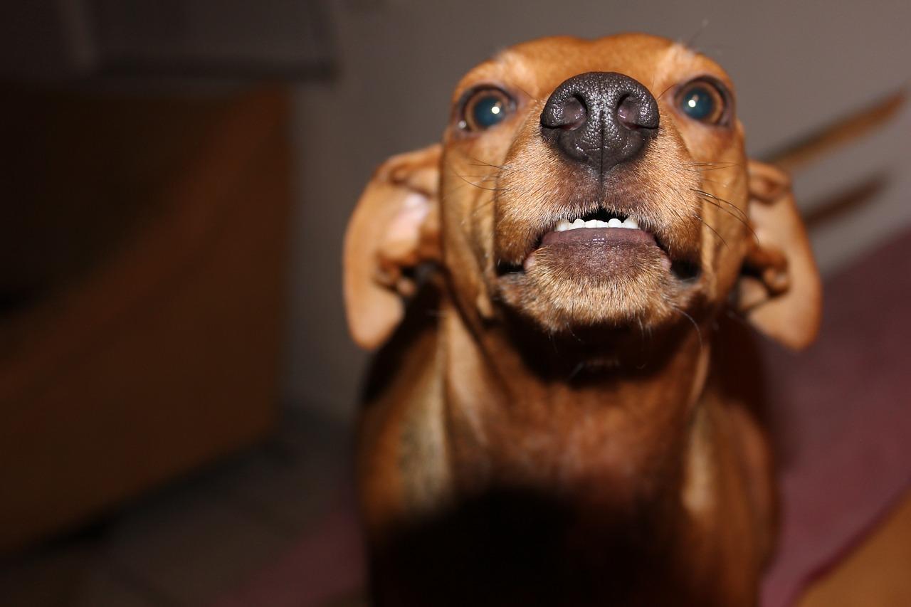 albuquerque dog behavior