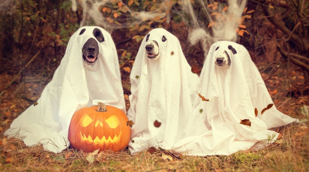 halloween candy dogs