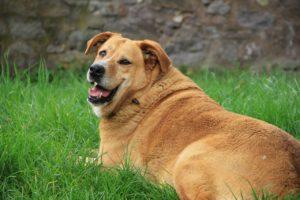 albuquerque pancreatitis dog