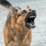dangerous dogs albuquerque