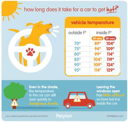 dogs hot in cars