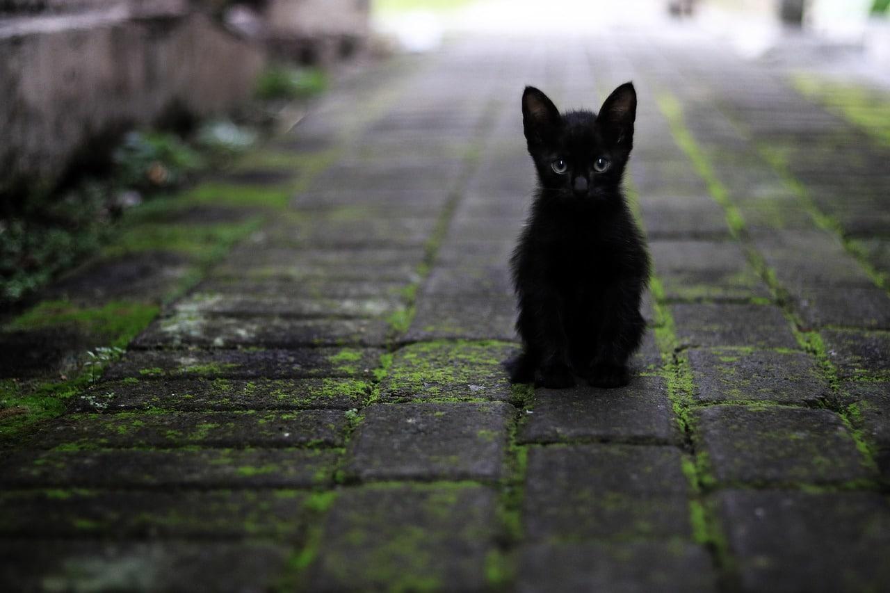 albuquerque cat