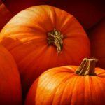 pumpkin dogs