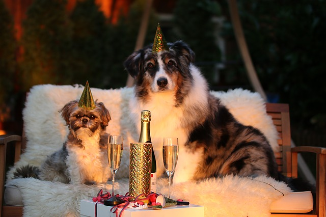 Pet new year resolutions