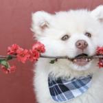 poisonous plants dogs