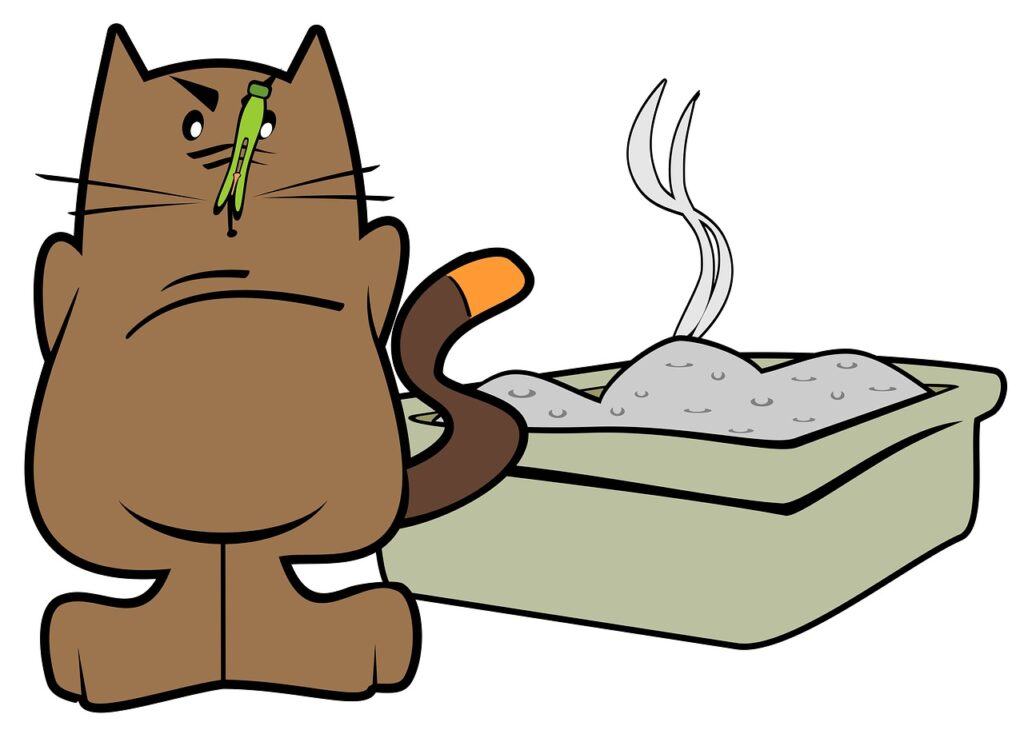 learn about cat poo