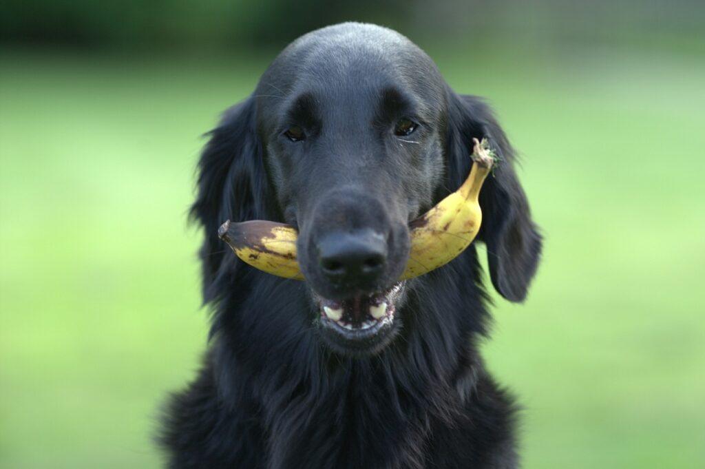 human dog food ok to eat