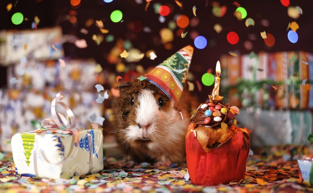 pet birthday party pixabay
