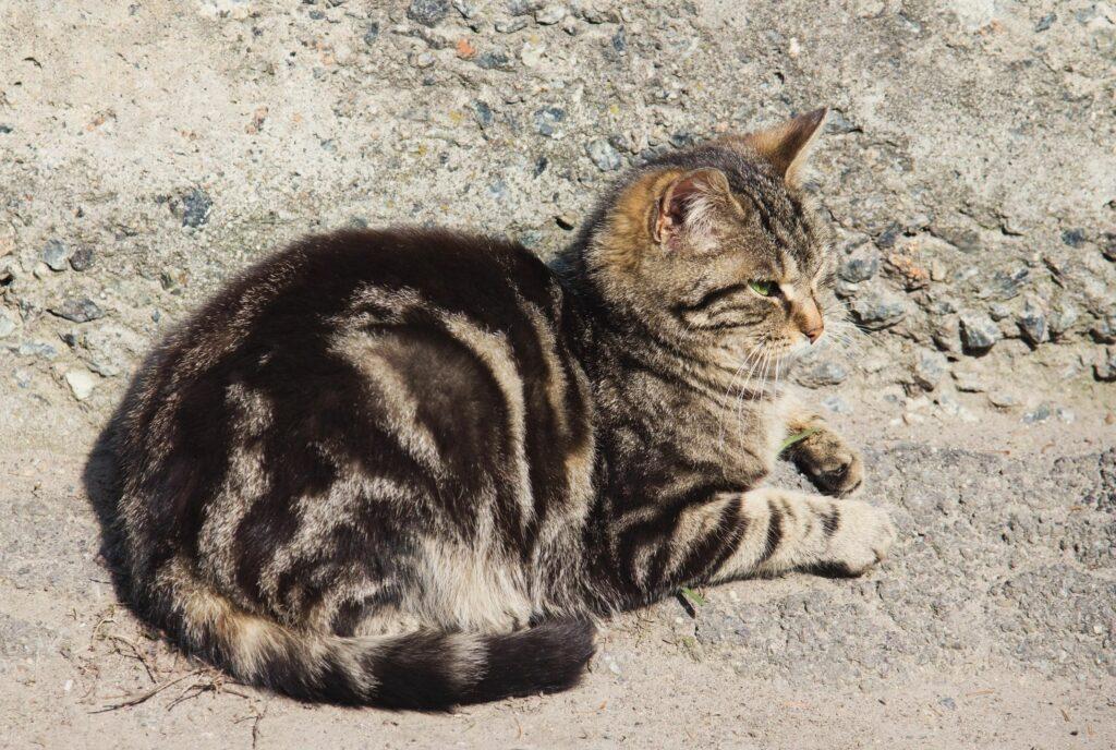 pet license albuquerque