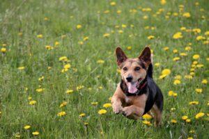 Spring Dog checklist