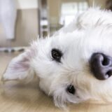 What Household Cleaners are Toxic to Your Pet