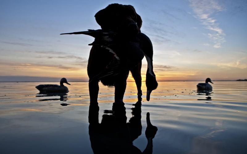 Steele Palacios Bay Hunt Sunrise