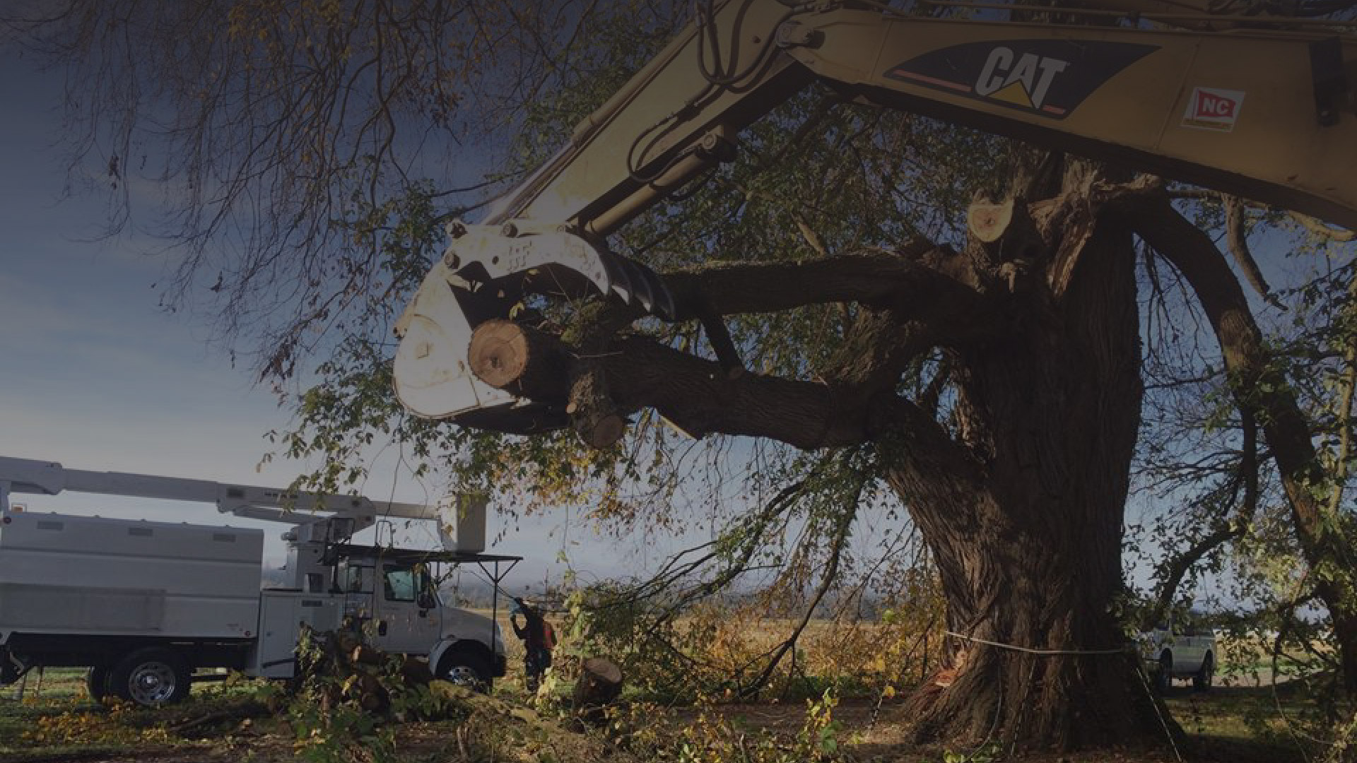 Tree Services Puget Sound