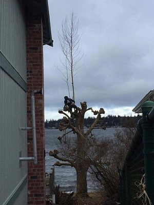 Tree Services in Puget Sound
