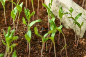 Benefits of Planting a Tree in Your Yard