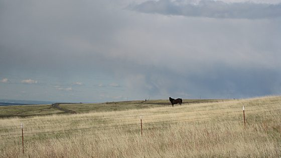 Lone Horse at scenic overlook.