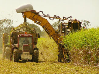 sugar-cane-cutter-machine