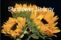 Sunflower Shanty