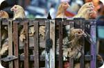 Chcken feed poisons