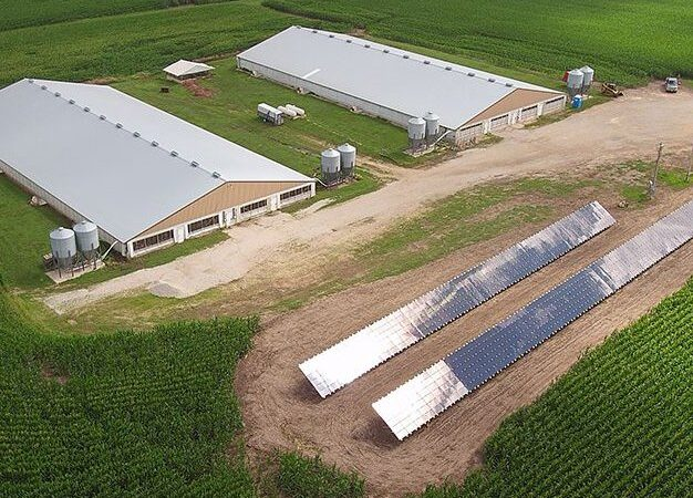 Pork Farm Utilizing Solar Panels