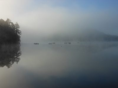 Canoes in the mist Algonquin
