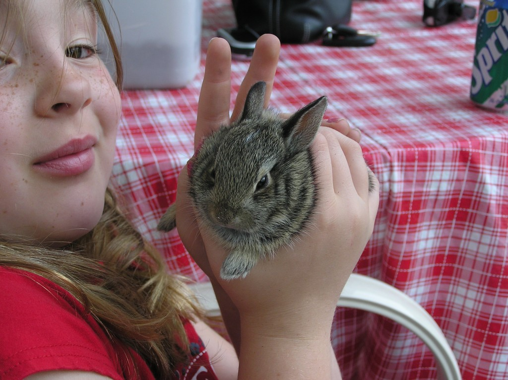 Bunny Born in a Patio Flower Pot