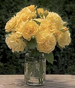 Julia Child Floribunda Rose Bouquet in Vase