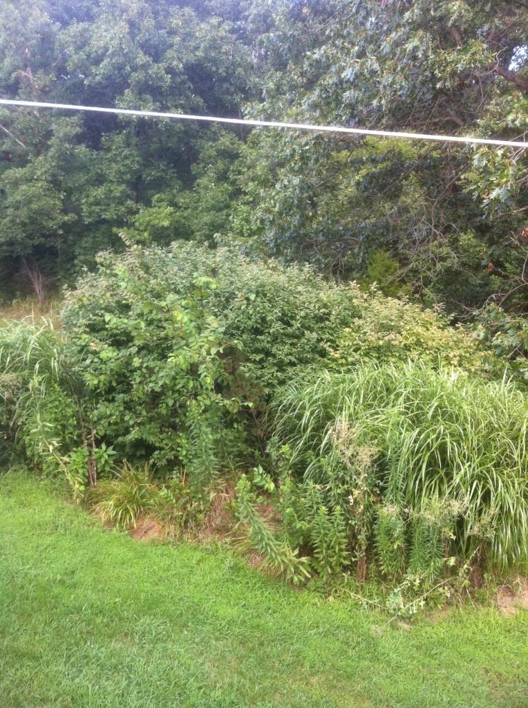 Hidden Garden Before Shot