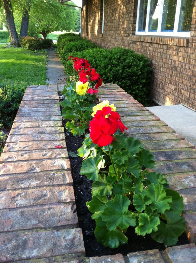 All-A-Twitter Miniature Rose Planter