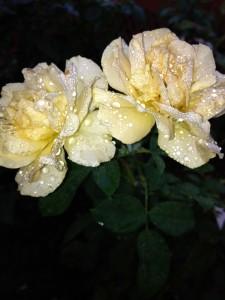 Julia Child With Rain Drops