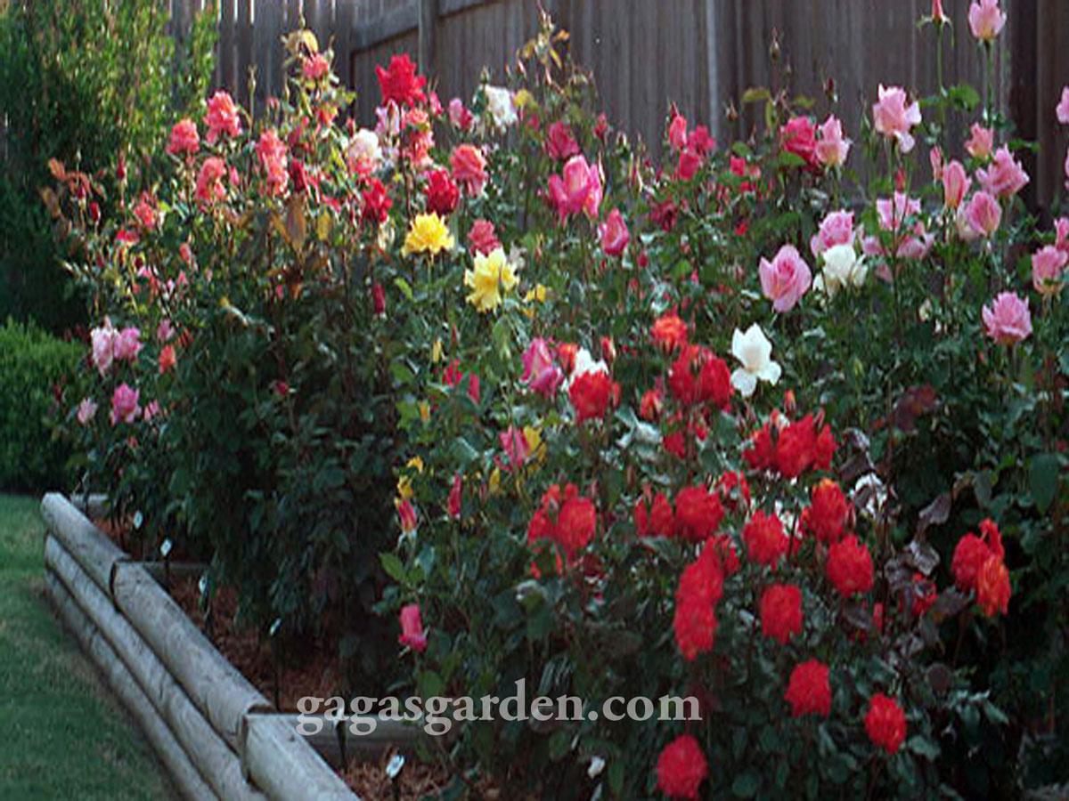 Visual Explosion of The Garden