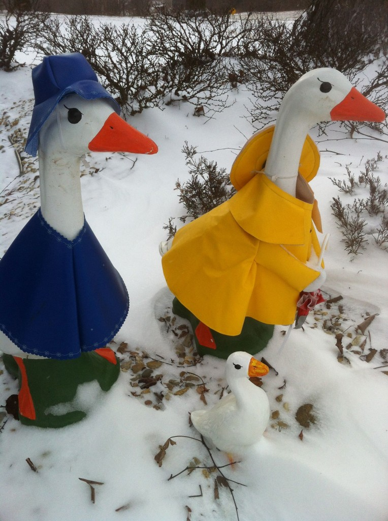 Geese Girls, My Canadian Honkers