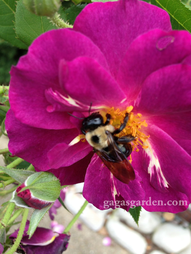 Stormy Weather, LCI with a Pollinator   Its All About Relationships
