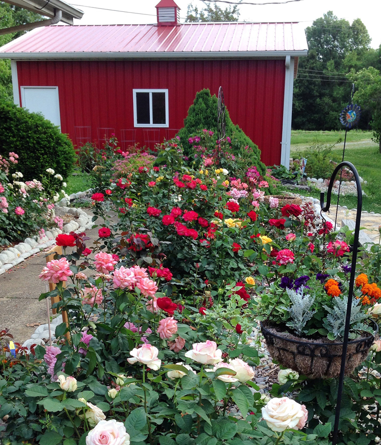 Four Seasons of Roses   Monthly Guide to Rose Care