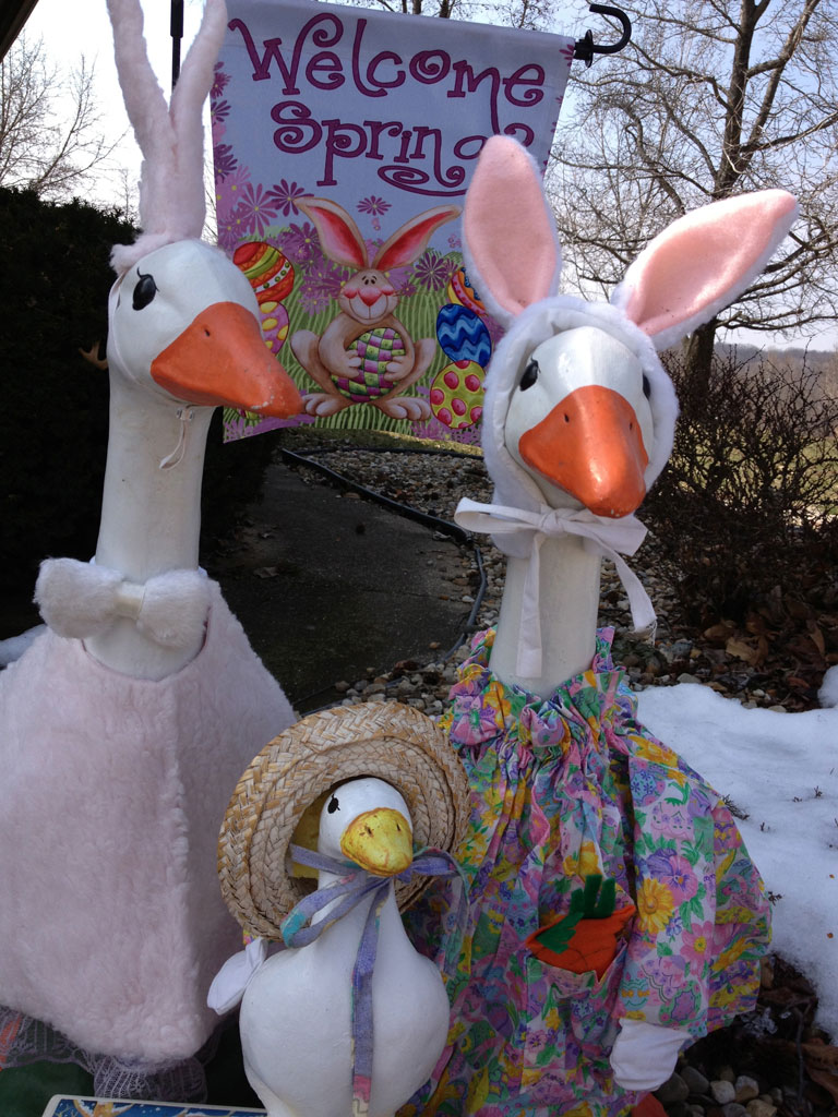 Geese Family Welcomes Spring