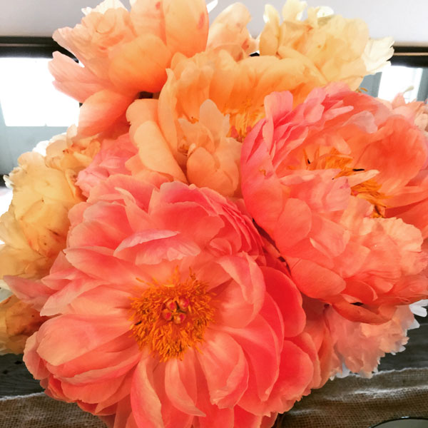 Coral Drift Peonies