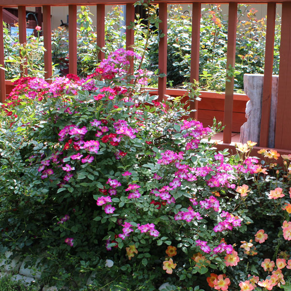 o Easy® Cherry Pie, Paprika & Fragrant Spreader as a beautiful border of color