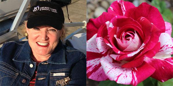 Susan Fox | 'Neil Diamond' 2nd Place Hybrid Tea Award Winner in 2014 American Rose Society Photography Contest Novice Class